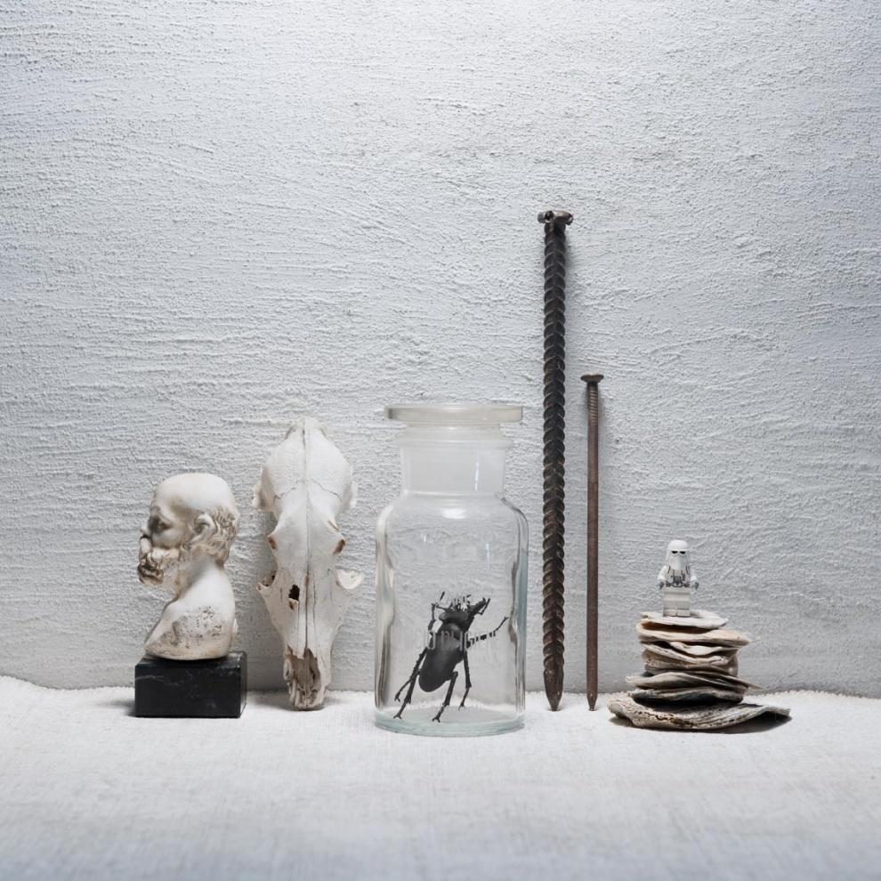 Natura bianca con insetto 2018 (white still life with insect) - 2018 tiratura variabile 1/7 stampa su Photo Rag BW 100% cotone  limited edition 1/7 printed on Photo Rag BW 100% cotton paper