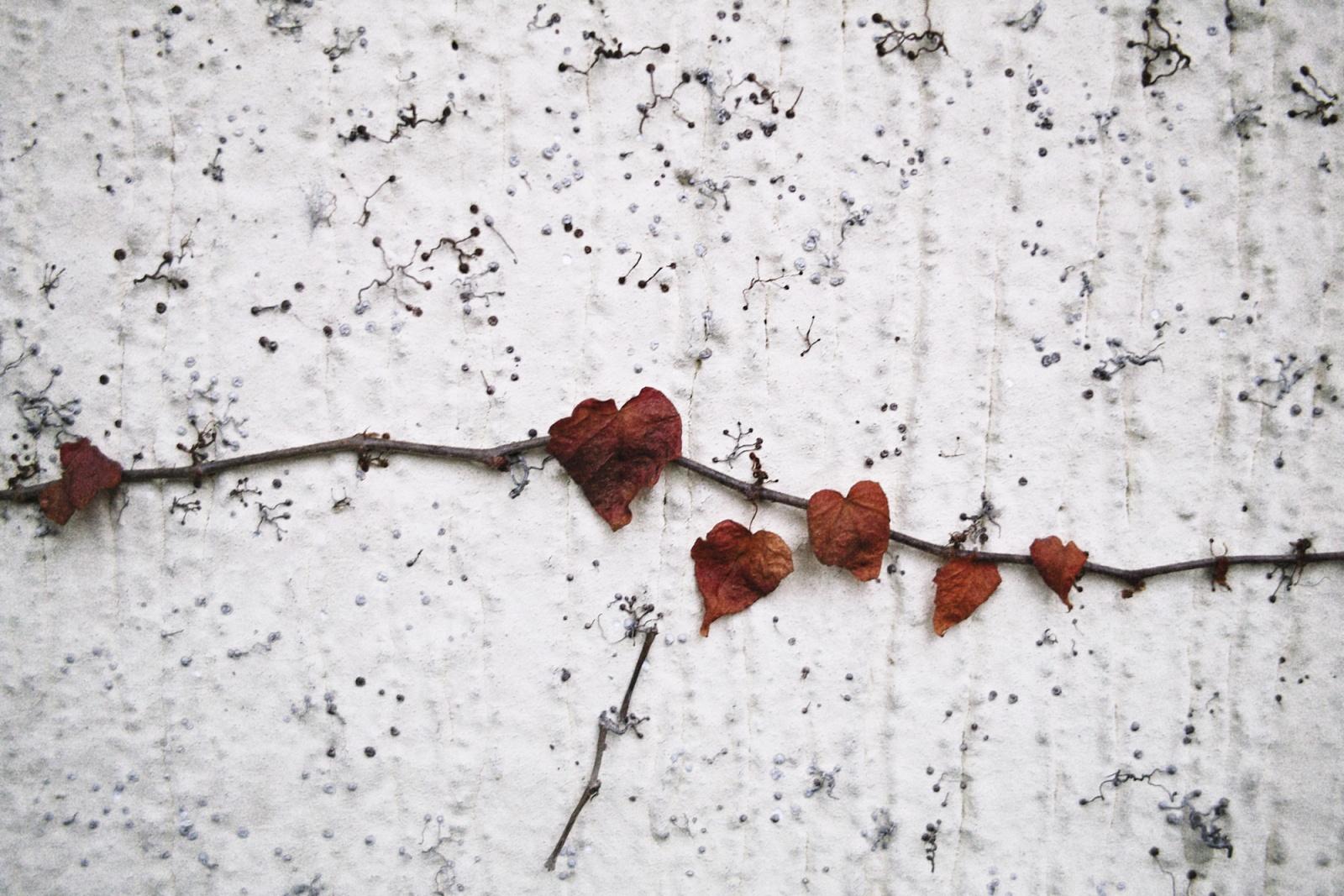wall in flower