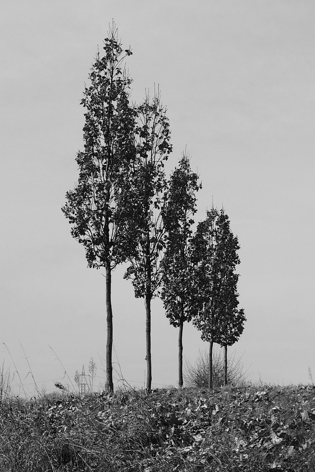 alberi solitari